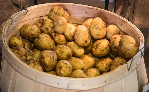 Barrel full of potatoes