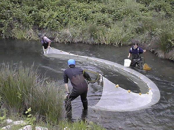 Men fishing with white seine net