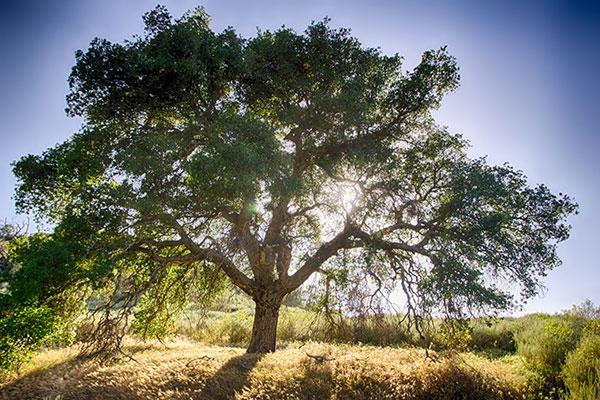 Oak Settings