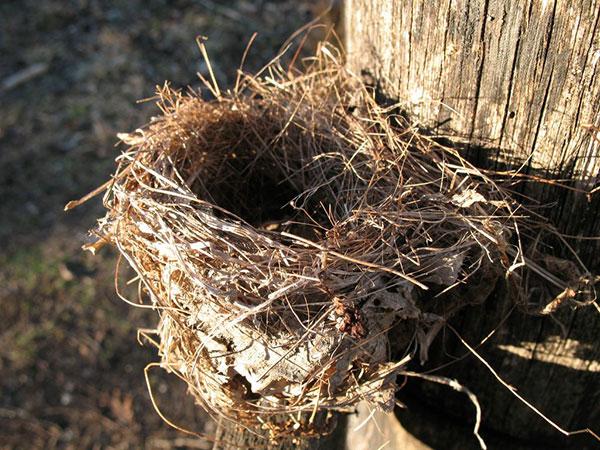 Using birds nests to start a fire