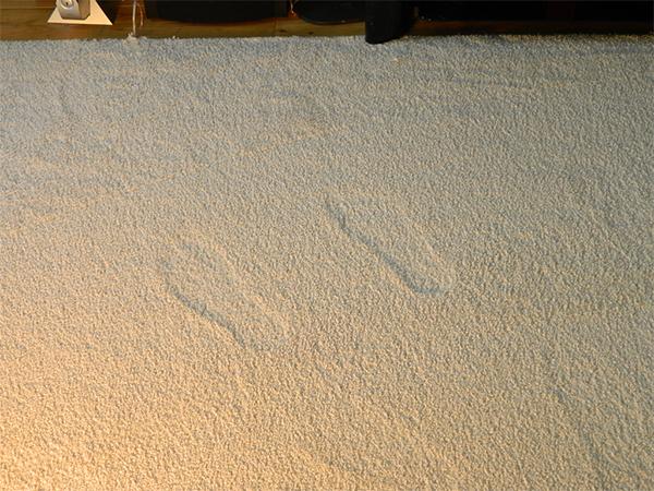 Tracks in Carpet