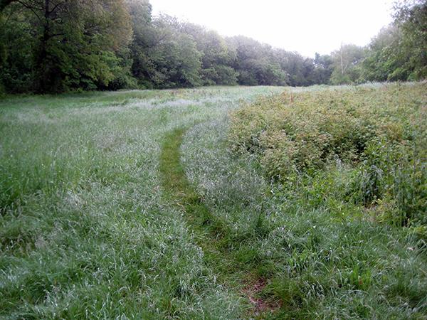 Tracks in grass